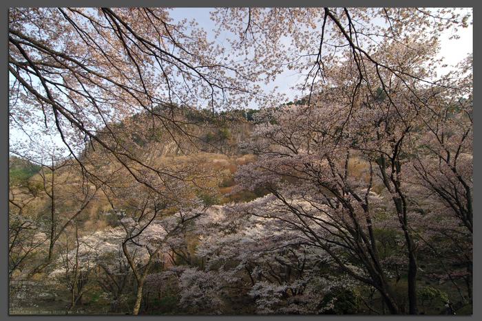 2011_4_屏風岩・桜_top1.jpg