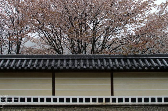 2011_4_本善寺・桜_28.jpg