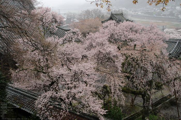 2011_4_本善寺・桜_29.jpg