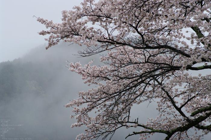 2011_4_本善寺・桜_35.jpg