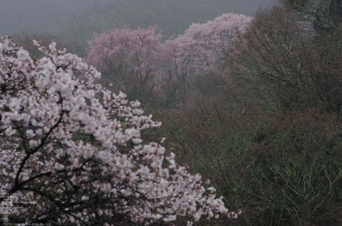 2011_4_東南院_36.jpg