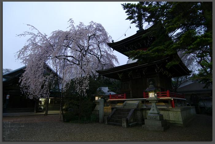 2011_4_東南院_top2.jpg