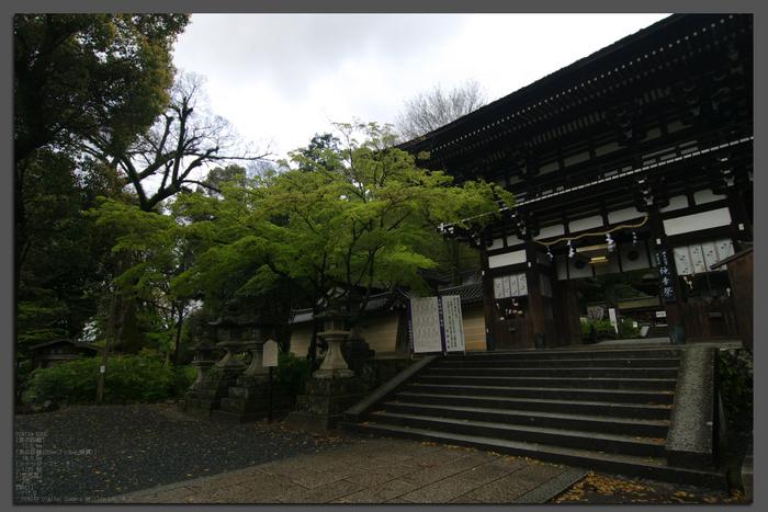 2011_4_松尾大社・山吹_top.jpg