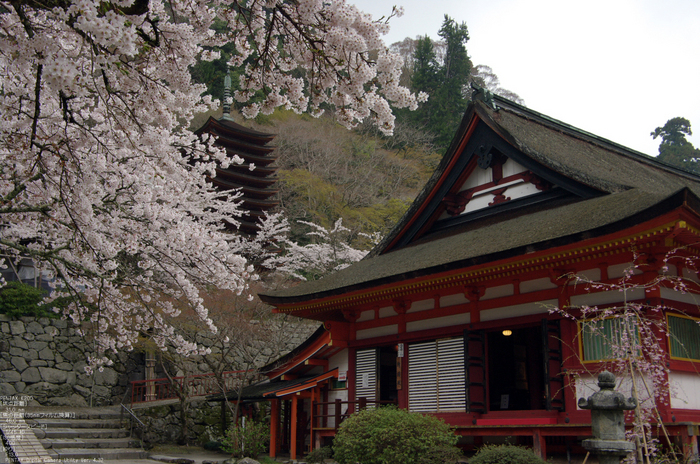 2011_4_談山神社・桜_12.jpg