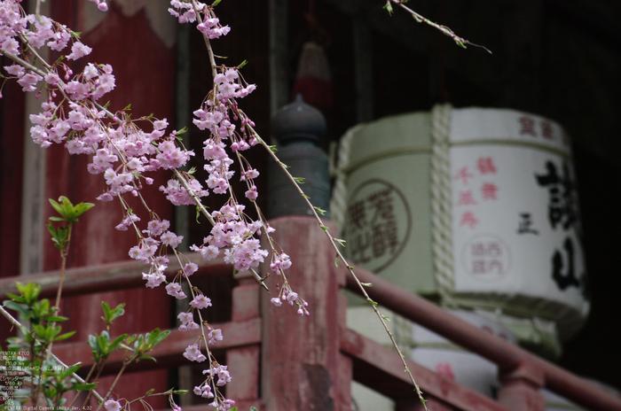 2011_4_談山神社・桜_15.jpg
