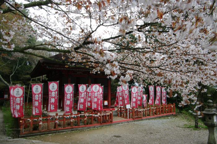 2011_4_談山神社・桜_3.jpg