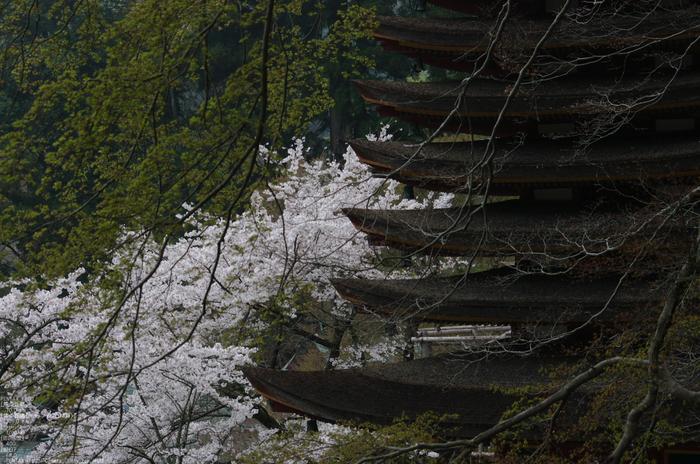 2011_4_談山神社・桜_5.jpg