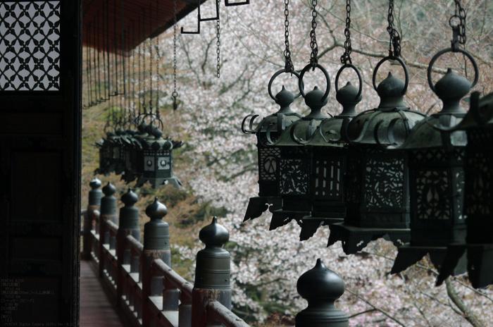 2011_4_談山神社・桜_6.jpg