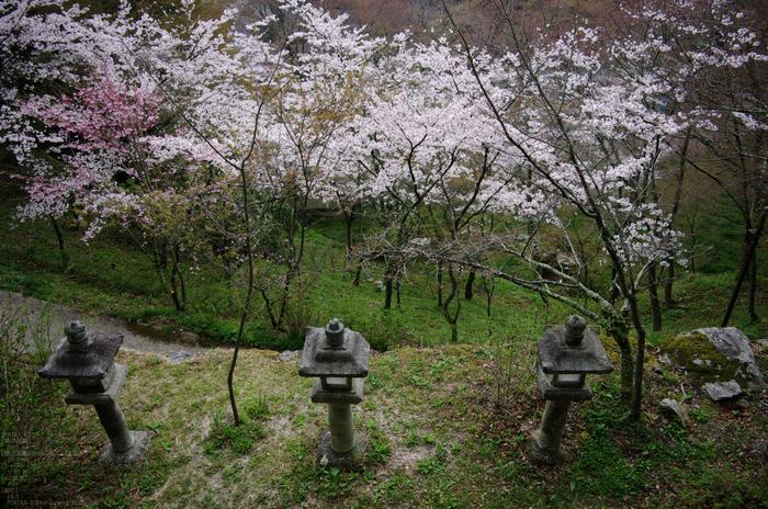 2011_4_談山神社・桜_7.jpg