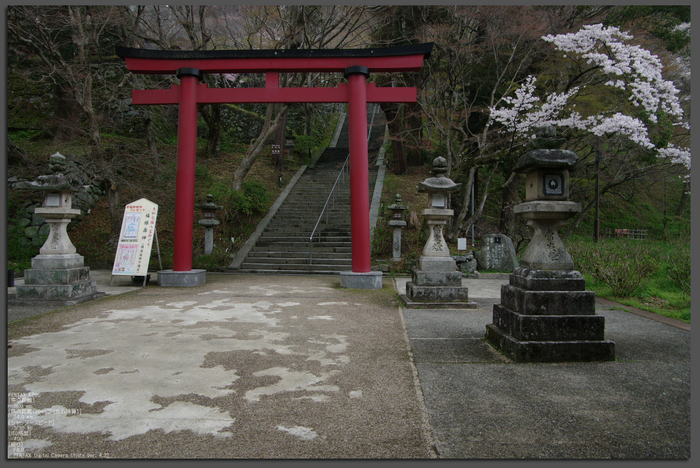 2011_4_談山神社・桜_top.jpg