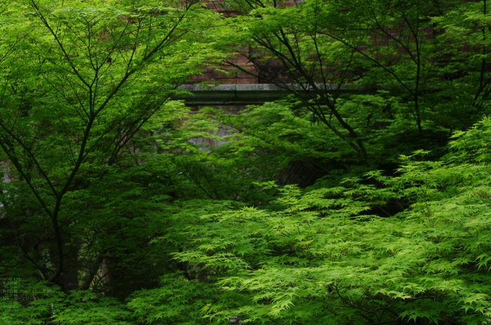 2011_5_南禅寺・新緑_24.jpg