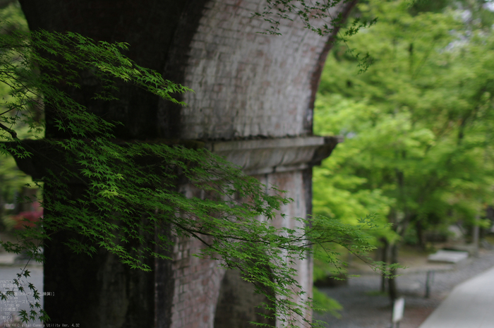 2011_5_南禅寺・新緑_25.jpg