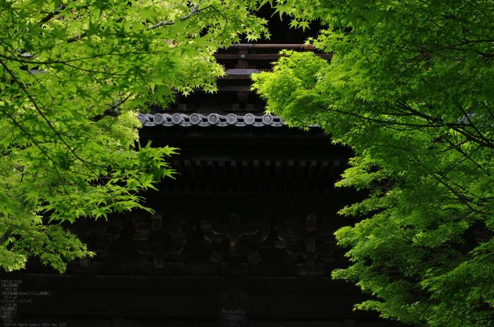 2011_5_南禅寺・新緑_39.jpg