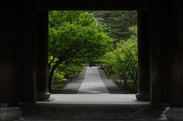 2011_5_南禅寺・新緑_4.jpg