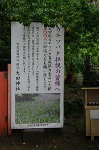 2011_5_大田神社・杜若_7.jpg