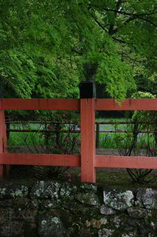 2011_5_大田神社・杜若_9.jpg