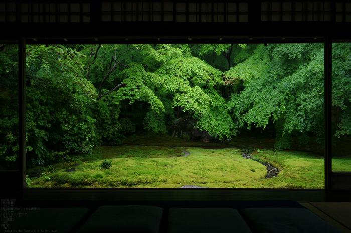 2011_5_瑠璃光院・新緑_20.jpg
