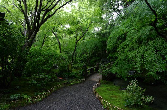 2011_5_瑠璃光院・新緑_27.jpg