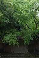 2011_5_瑠璃光院・新緑_ex1.jpg