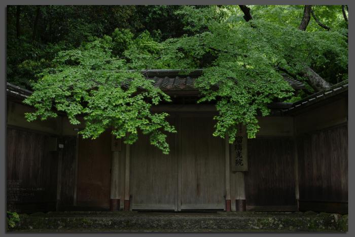 2011_5_瑠璃光院・新緑_top1.jpg