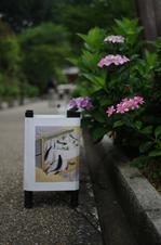 2011_6_三室戸寺・紫陽花_ex.jpg