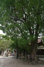 2011_6_藤森神社・紫陽花_7.jpg