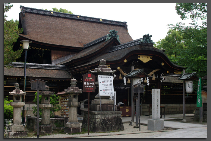 2011_6_藤森神社・紫陽花_top1.jpg