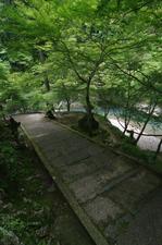 2011_6_西明寺・青椛_4.jpg
