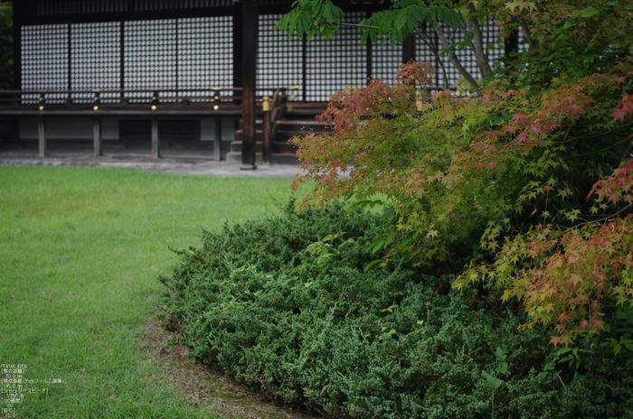 201107_勧修寺・蓮_16.jpg