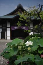 201107_勧修寺・蓮_2.jpg