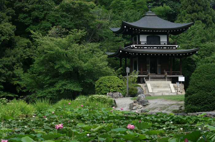 201107_勧修寺・蓮_4.jpg