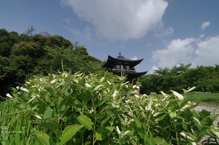 201107_勧修寺・蓮_7.jpg