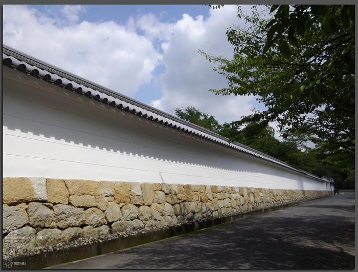 201107_勧修寺・蓮_top1.jpg