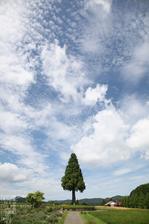 2011_7_青山高原_7.jpg