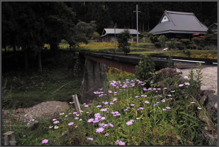 201108_北山ルドベキア_top2.jpg