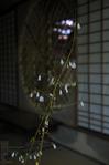 祇王寺_苔_201109_17.jpg