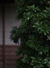 蓮花寺_201109_14.jpg