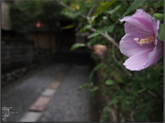 蓮花寺_201109_top1.jpg
