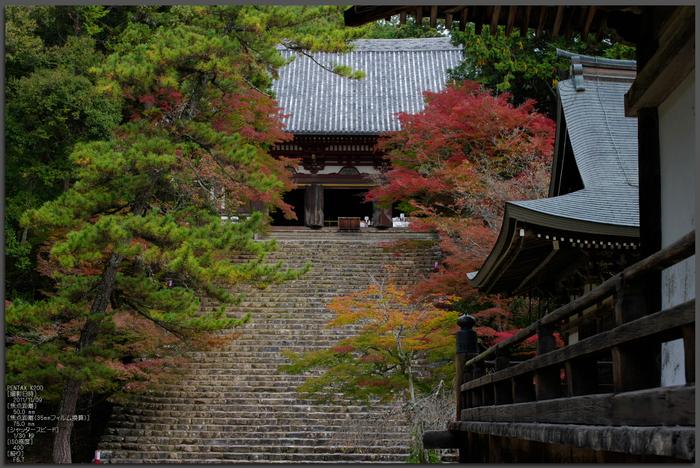 神護寺_紅葉_2011_top1.jpg