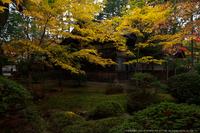 2011高野山紅葉_14.jpg