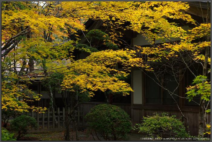 2011高野山紅葉_top1.jpg