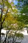 丹生川上神社・紅葉_2011_3.jpg