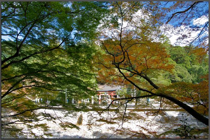 丹生川上神社・紅葉_2011_top.jpg