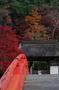 室生寺・紅葉_2011_2.jpg