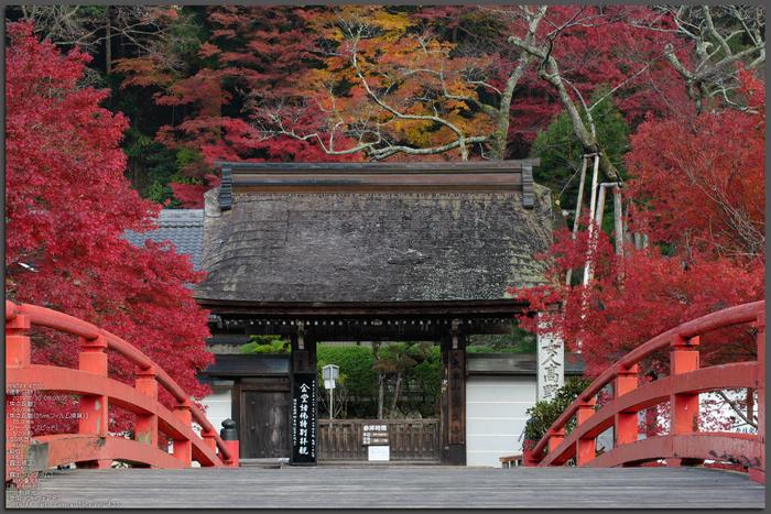 室生寺・紅葉_2011_top1.jpg