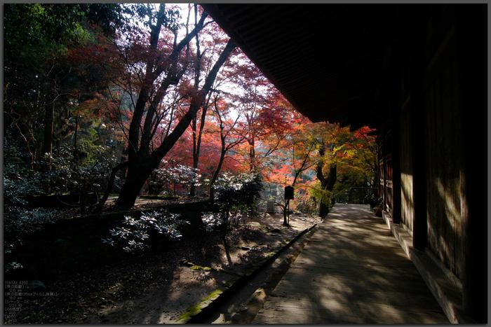 室生寺・紅葉_2011_top5.jpg