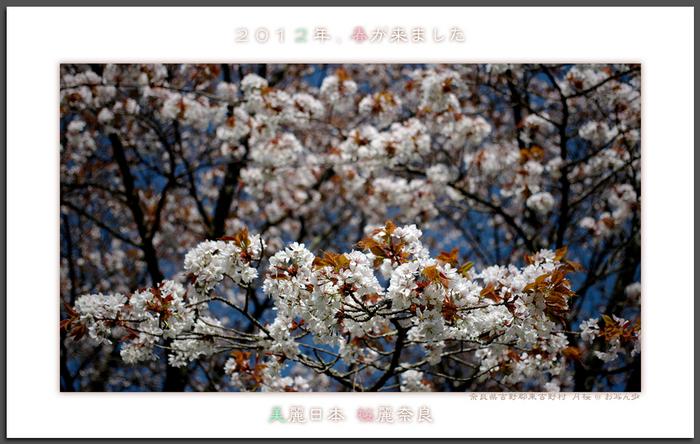 月うさぎ・月桜_2012.jpg