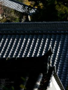 長谷寺紅葉_2011_22.jpg