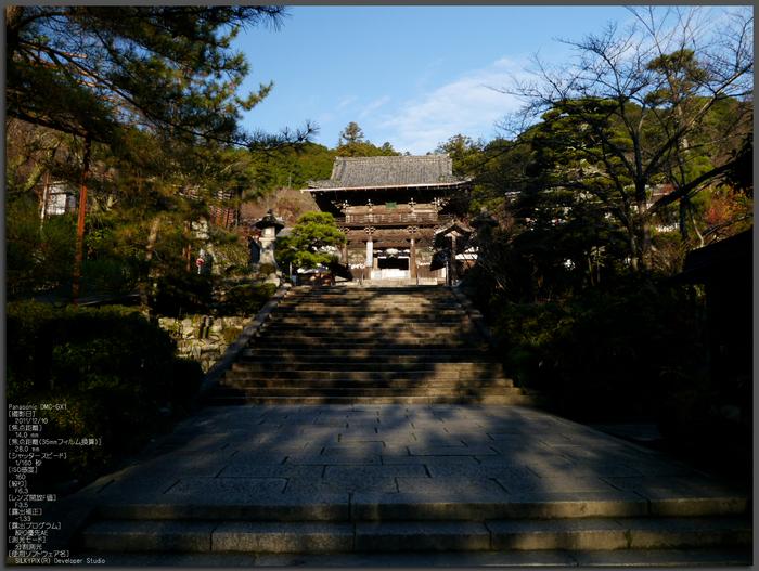長谷寺紅葉_2011_top.jpg