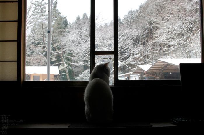 2012冬_月うさぎ_17.jpg